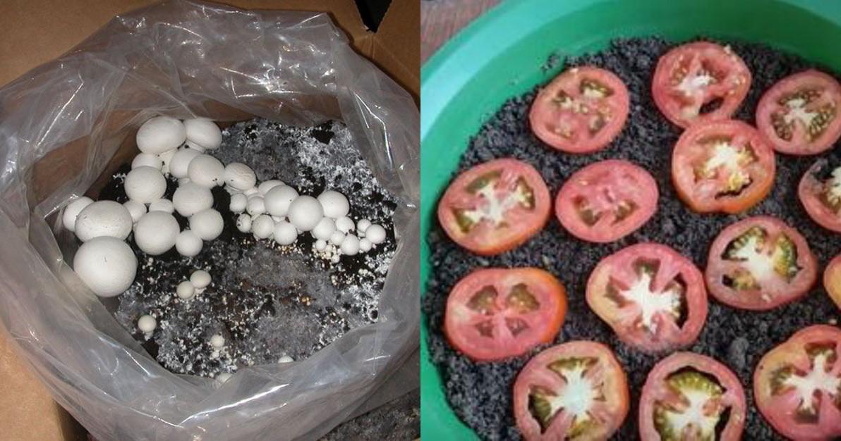 8 Gemüsesorten in der Wohnung anpflanzen.